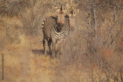 Wild fauna