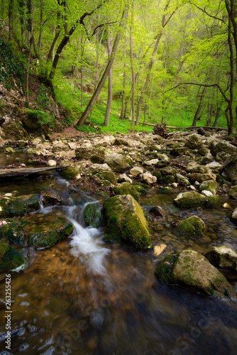 Flowing stream in the beautiful green forest - 263255426