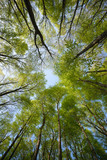 Beautiful forest scene, bottom view of tall trees