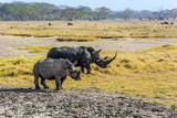Family of gorgeous white rhinos