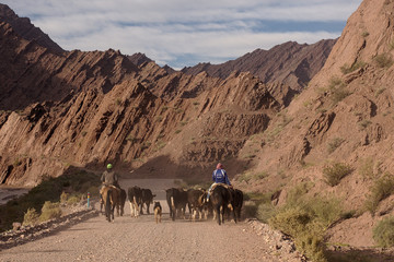 La Rioja, Argentina - 2018: Men on horses and cows on route 76, with mountains in the background.
