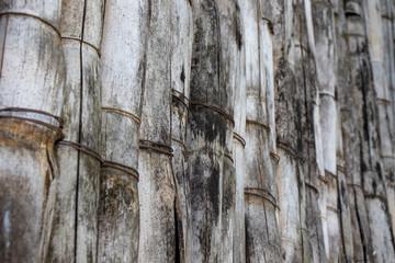 Valla bambú © Aldair