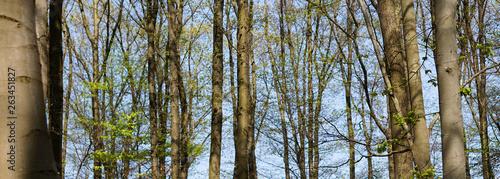 Dichter Wald - 263451827