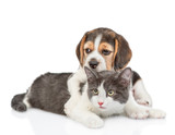 Beagle puppy hugging cat. isolated on white background