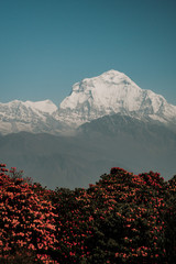 The Dhaulagiri is a mountainous massif of the Himalayas that culminates in the Dhaulagiri I peak, which at 8,167 meters above sea level is the seventh highest peak on Earth. © juanma hache