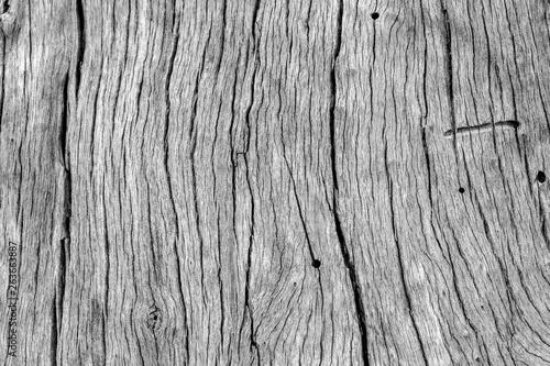 Fond bois sec de vieille souche