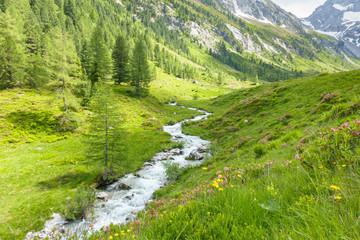 Gebirgsbach im Frühsommer in den Alpen