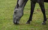 close up of head of horse gazing in the meadow