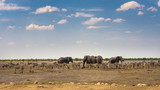 African elephants and zebras at a waterhole in Etosha National Park, Namibia