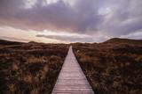 Wooden boardwalk leading through dunes vegetation