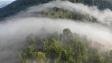 Rainforest (rain forest) jungle and clouds aerial footage
