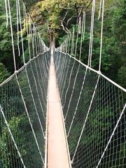 Taman Negara, Rain forest, Malaysia