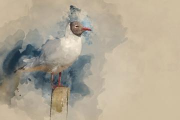 Watercolor painting of Portrait of Mediterranean Gull Icthyaetus Melanocephalus