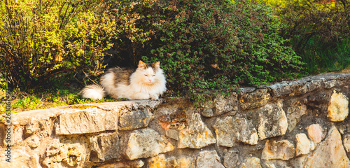The green-eyed cat is heated on the sun in a spring garden