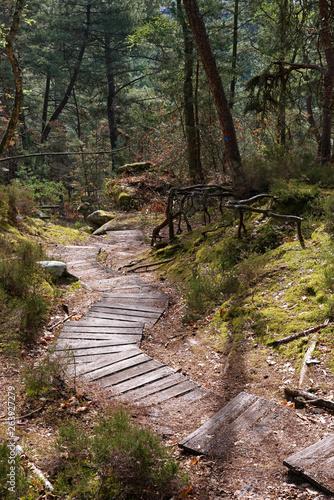Wooden Outdoor Steps for erosion protection in Fontainebleau forest