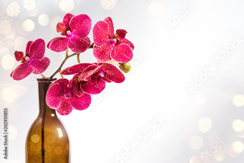 Orchids in a vase. Red flowers. Orchid flower frame. Background of flowers and bokeh