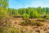 Vegetationszonen in der Wahner Heide