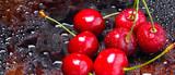 Red cherries in water drops. Fresh cherries on dark background. Berries for vegan. Washed cherries before cooking