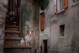 Little Jack Russell Terrier in the city. Pet for a walk in the city. Dog Journey. healthy lifestyle