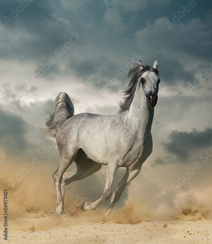 Arabian horse in desert