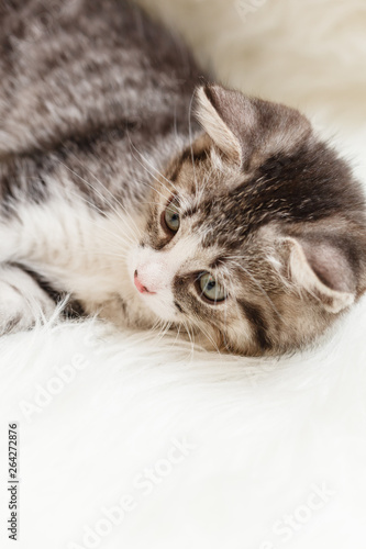 little kitten lies comfortably on a fluffy blanket © Maksim Shebeko