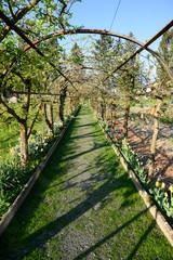 Spalierbäume im Klostergarten, Wesemlin, Luzern, Schweiz