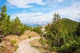 Wanderweg rund um den Wank Gipfel, Region Garmisch, inmitten von Latschen