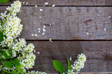 Bird cherry branch on a wooden surface
