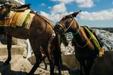 donkeys climb up the streets of santorini