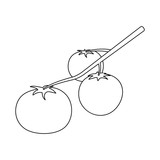 Isolated object of tomato and kitchen logo. Collection of tomato and vegetarian stock symbol for web.