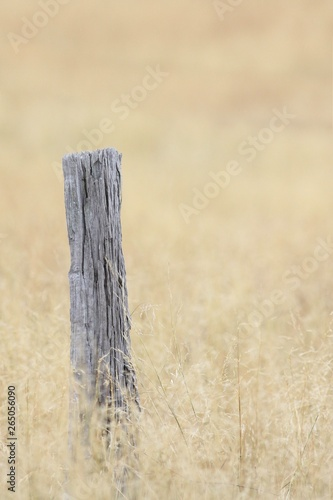 Old fence post in a field
