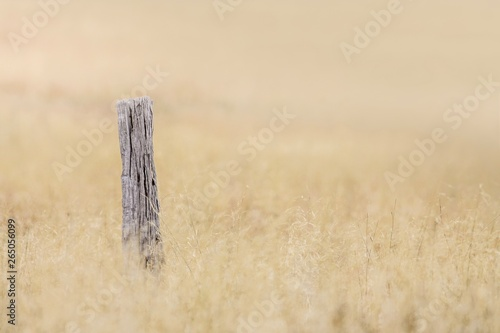Fencepost in a field