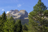 The French Alps behind pine trees
