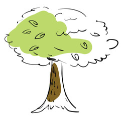 Tree sketch vector or color illustration