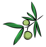Branch of an olive tree with two olives on it/Olive branch with olives vector or color illustration
